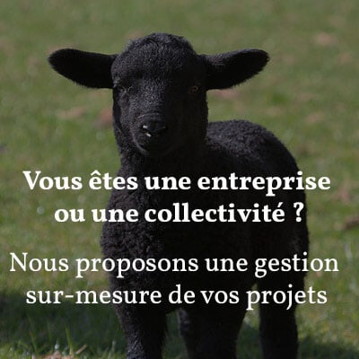 troupeau_moutons_éco-pâturage_lesmoutonsurbains_107e3d